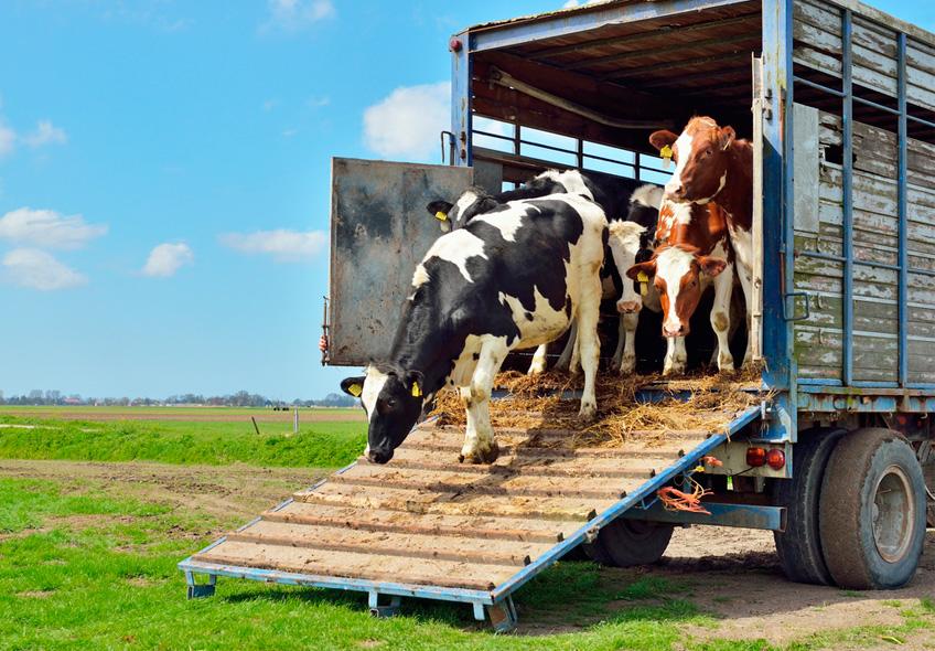 Monitoramento no transporte de animais